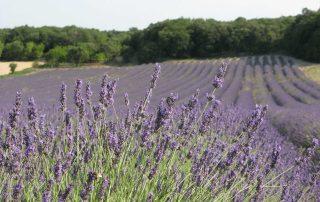 Photo tourisme Provence